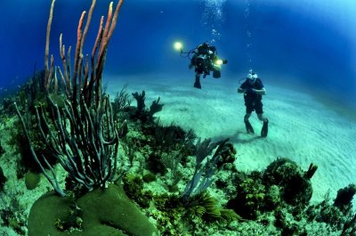 Deep reef survey reveals 195 coral species