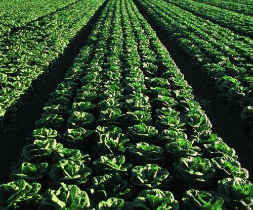 FDA begins testing romaine lettuce after E. coli outbreaks sicken hundreds