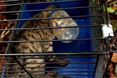 Cat rescued after two weeks with head stuck in plastic jar