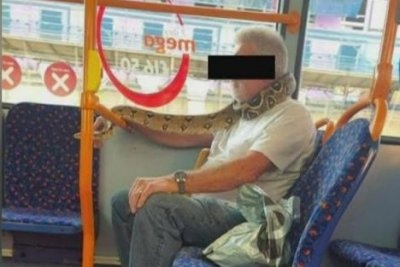 Watch: Man spotted wearing live snake as a mask on city bus