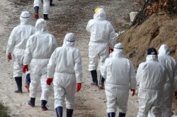 South Korean avian flu epidemic reaches Seoul
