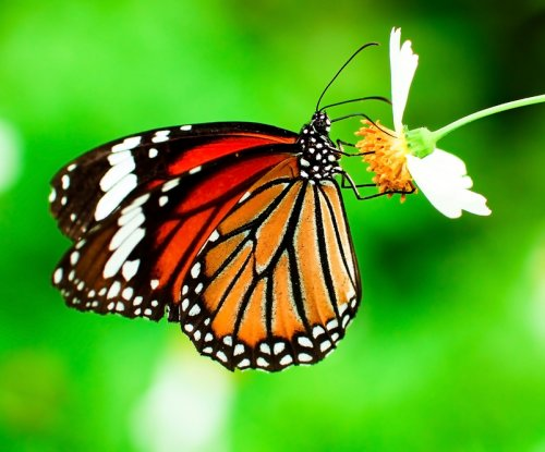 FWS to review status of monarch butterfly