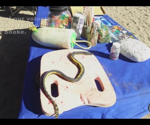 Rare venomous sea snake found on California beach