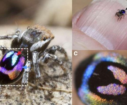 Rainbow spider's iridescence could inspire color technology advances