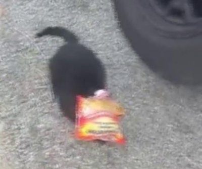 California deputy rescues cat with head stuck in ramen noodle bag