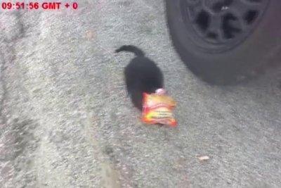 California deputy rescues cat with head stuck in ramen noodle bag