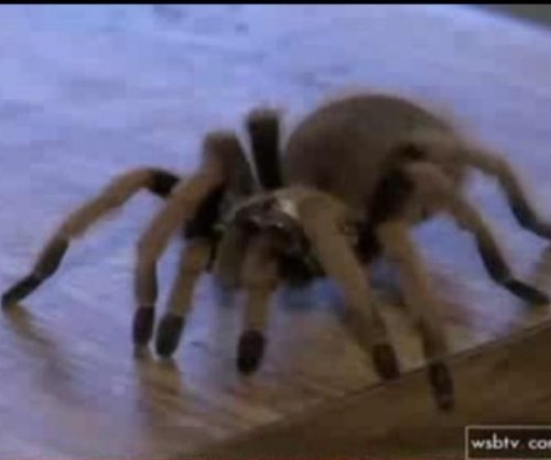 Tarantulas stolen from Georgia home's crawlspace