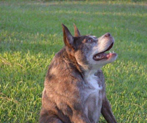 Quasi Modo named 'World's Ugliest Dog' at California fair