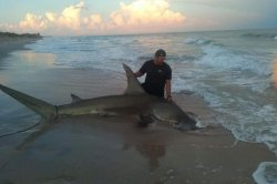 Man reels in 13-foot hammerhead shark from North Carolina beach
