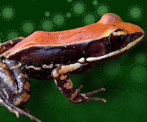 Skin mucus of South Indian frog kills flu virus