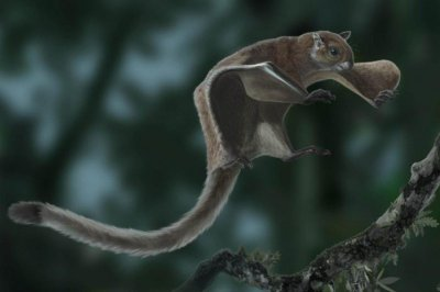 Oldest flying squirrel fossil reshapes evolutionary tree