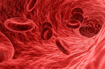 Scientists use stem cells to grow functional blood vessels