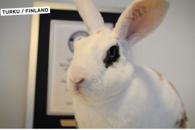 Rabbit does 20 tricks in 1 minute for Guinness record