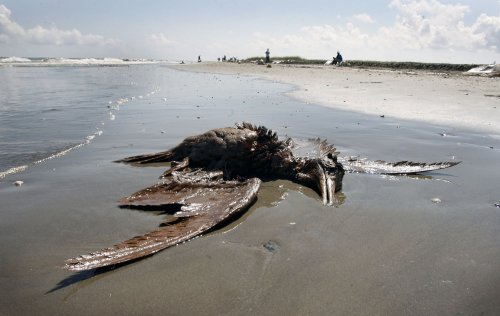 BP chief: Gulf spill wasn't 'black swan'