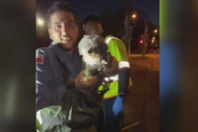 Deaf and blind poodle rescued from D.C. sewer