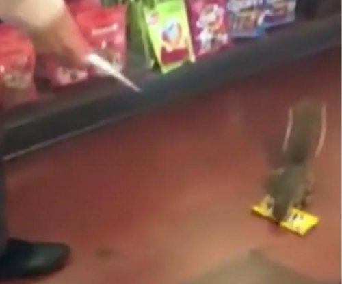 Shoplifting squirrel steals candy from Disney World store
