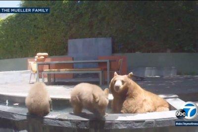 Bear family takes a swim in California family's pool