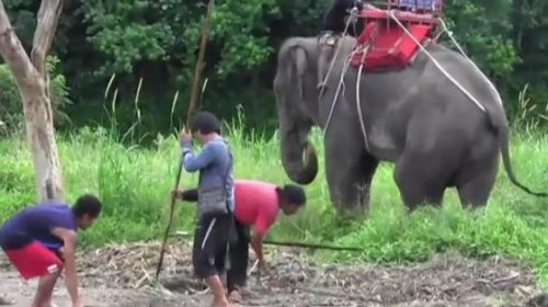 Elephant tramples handler, abducts tourists