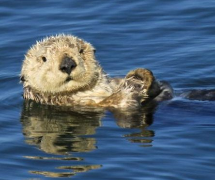 California officials offer $10K reward in hunt for sea otter killers