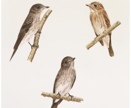 Scientists confirm new bird species in Indonesia