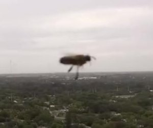 Bees attack camera drone at Florida barbecue