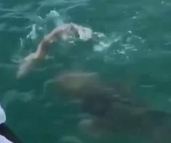 Fish steals shark from Florida fisherman's line