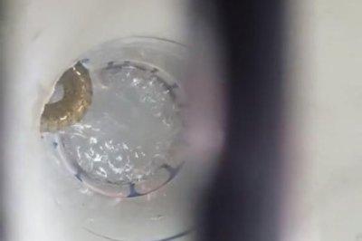 Watch:-Snake-spotted-in-bathroom-drain-in-Australia