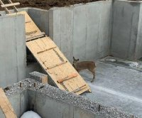 Deer rescued from basement of house under construction