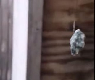 Spider uses web to hoist pebble in Denmark