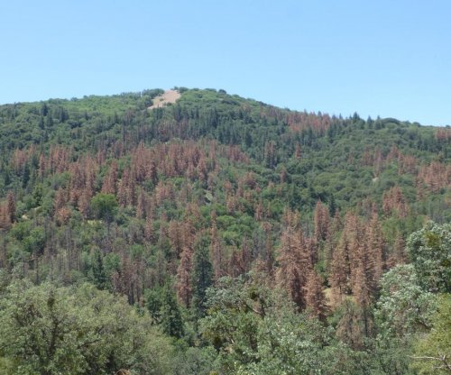 Drought threatens nearly all U.S. forests