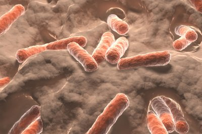 Genomic sequencing gives insight into Shigella outbreaks