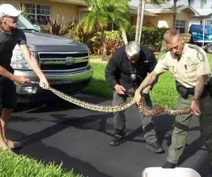 Florida man catches 8-foot python in his garage