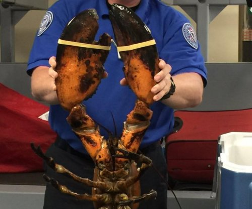 TSA finds massive 20-pound lobster in checked luggage