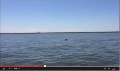 Whale spotted in Virginia's Elizabeth River