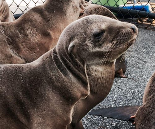 Emaciated sea lion rescued from major San Francisco boulevard