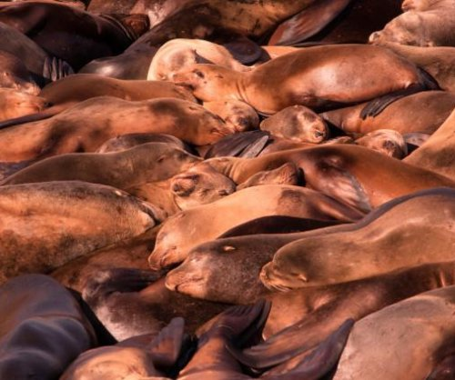 Oregon town hopes replica orca scares resident sea lions