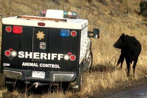 polk sheriff's animal control