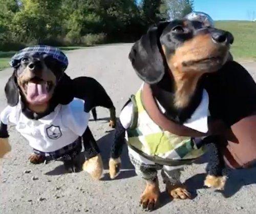 Pair of Dachshunds tee off at Canadian golf course