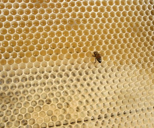 Manuka honey curbs bacteria growth, Southampton study claims