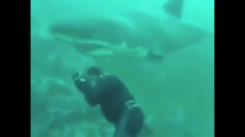 Diver's close call with great white shark caught on camera