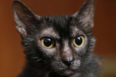 Poppy, Bella top list of most popular cat names