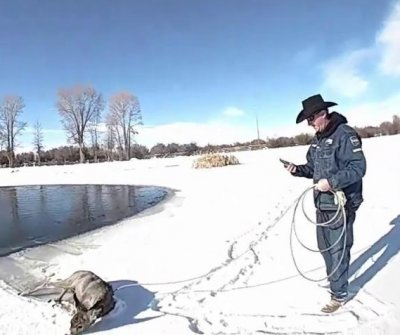 Deputies lasso deer that fell through ice into frozen pond
