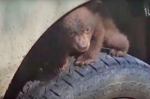 Calif. forestry workers have adorable encounter with bear cub
