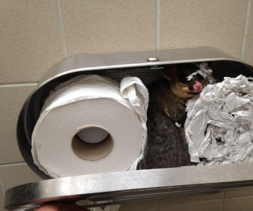 Possum found hiding in toilet paper dispenser