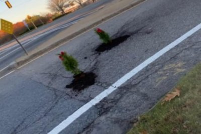 Massachusetts man plants Christmas trees in potholes