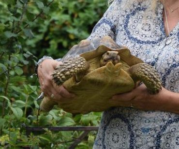 Missing tortoise turns up blocks away 15 months later