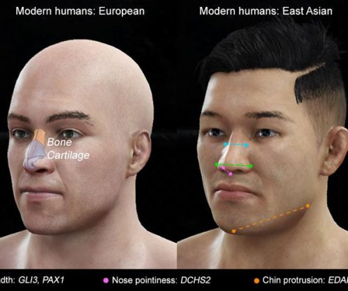 Genes for nose shape discovered
