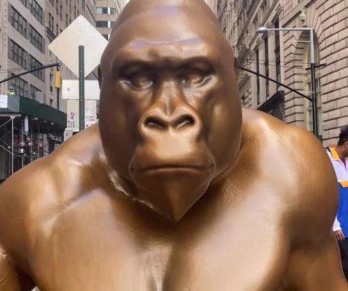 Harambe gorilla statue installed opposite Wall Street's Charging Bull