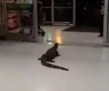 Giant monitor lizard walks into grocery store, scares off customers
