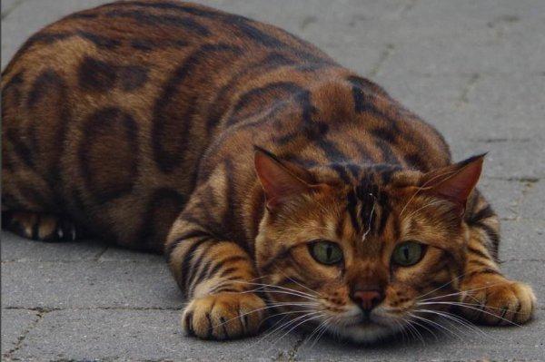 playful cat behavior